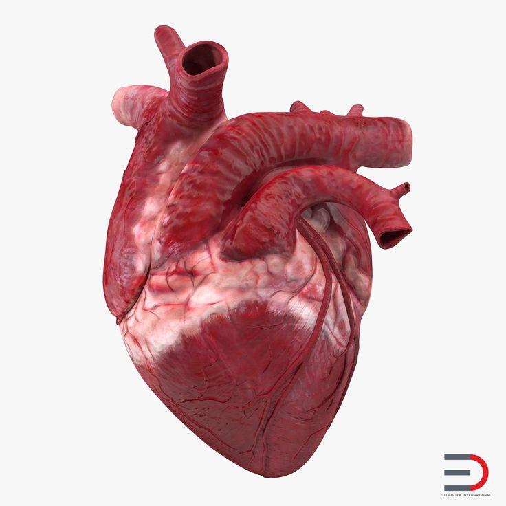 6Анатомия сердца.jpg