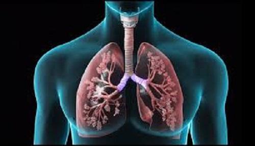 Легкие – орган дыхания
